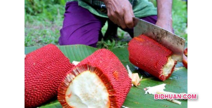 Manfaat Buah Merah Papua untuk mengobati penyakit