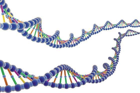 Pasien Ebola akan meninggal tergantung Faktor Genetik