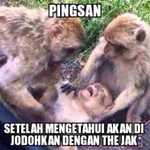 kawin monyet pingsan
