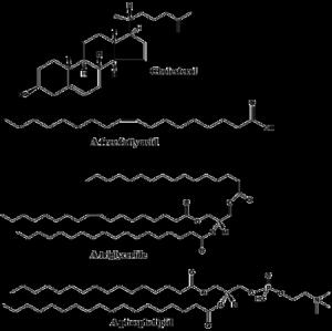 contoh lipid