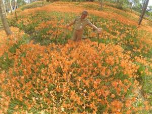 Mbak Isna @isnanine_ Ini pak haryo, camat patuk gunungkidul, promosi kebun bunga amarillys yg mekar sethun skali. Hayo kesini @JogjaToday