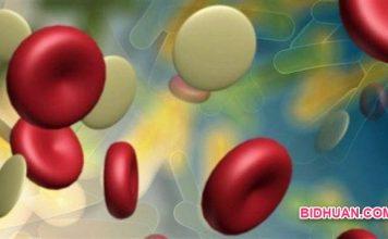 Kekurangan Albumin dalam Darah, Efeknya Bagaimana