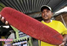 5 Manfaat Buah Merah Papua untuk Kesehatan Tubuh