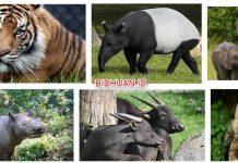 8 Hewan Langka di Indonesia yang Terancam Punah dan Sangat Dilindungi