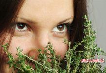 3 Ciri Khusus Tumbuhan dan Gambarnya: Teratai, Kaktus, Eceng Gondok