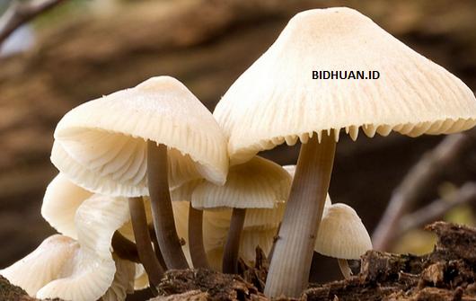 dasar klasifikasi jamur