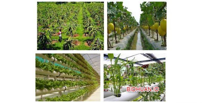 5 Bisnis Pertanian Paling Menjanjikan dengan Modal Murah dan Dijamin Anti Ribet