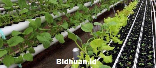 Bisnis Pertanian Menjual Bibit Unggul