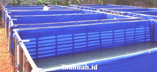 Kolam Untuk Budidaya Ikan Lele