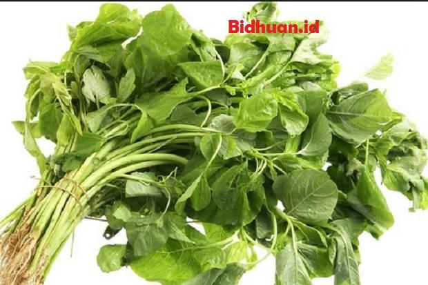 Makanan yang mengandung kalsium Bayam