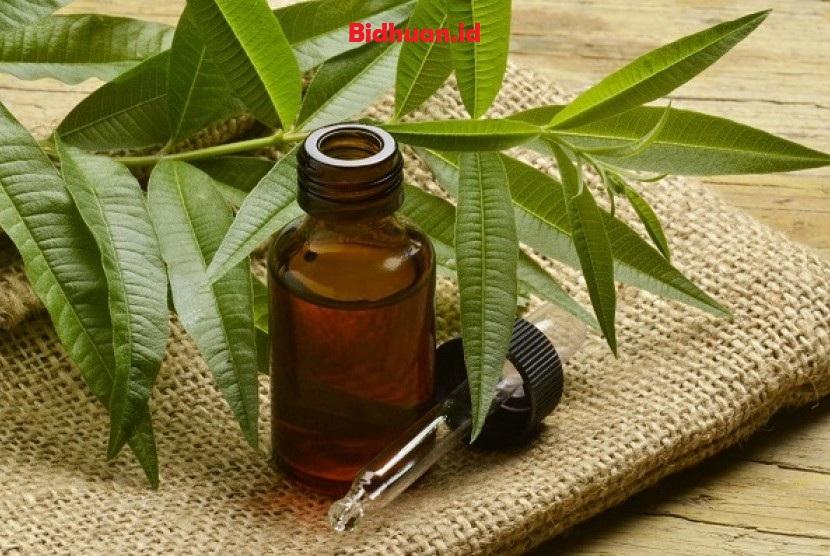 Obat bisul supaya cepat pecah dengan minyak pohon teh