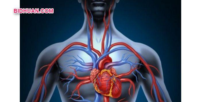Sistem Peredaran Darah Besar dan Kecil